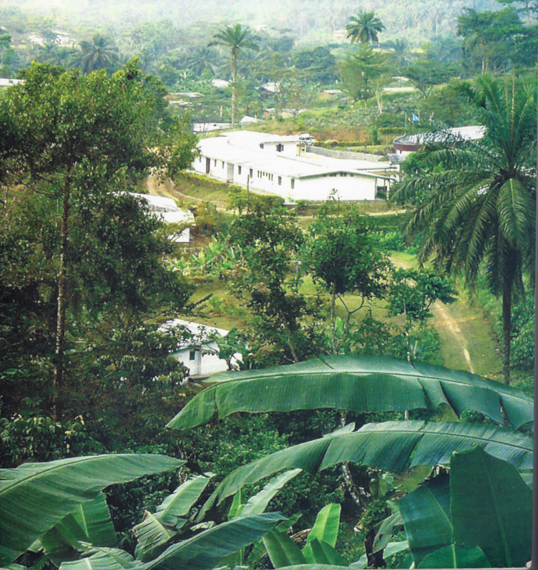 fontem cameroon nurse killed by military mill hill missionaries